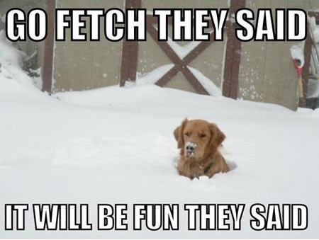funny-dog-snow-winter